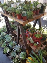 Succulent variety at lower prices in Camp Pendleton, California