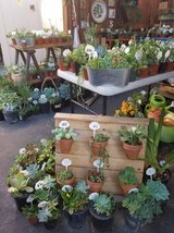 Beautiful succulents and arrangements at low prices in Camp Pendleton, California