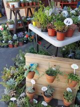 Drought tolerant plants and succulents at low prices in Camp Pendleton, California