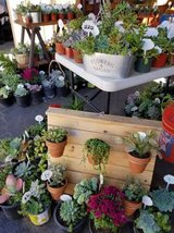 Succulents,arrangements,drought tolerant plants,Mums at lower prices in Camp Pendleton, California