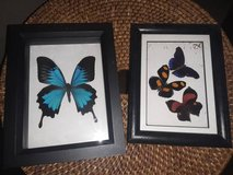 Discounted Butterfly Art - 8 x 5 Black Framed, $25 ea in Fairfield, California