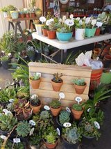 Succulents,arrangements and plants at lower than retail prices in Camp Pendleton, California