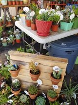 Succulents,drought tolerant plants and arrangements at low prices in Temecula, California