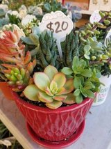 New ceramic pot with drainage tray filled with succulents in Camp Pendleton, California