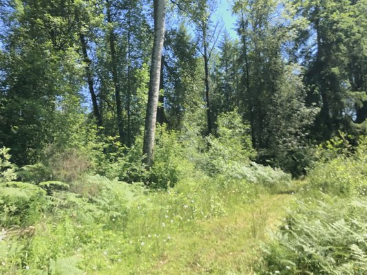 5 Acres in Roy WA for Sale! *338th in REmilitary