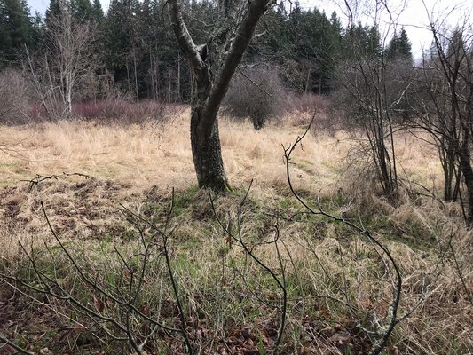 Treed Lot in Cul-de-sac!! - Meadow Ct in REmilitary